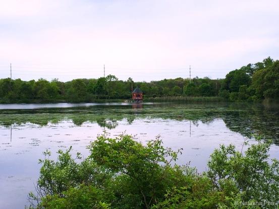 Massapequa Preserve lake